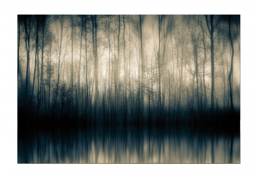 Forest Whispers 1