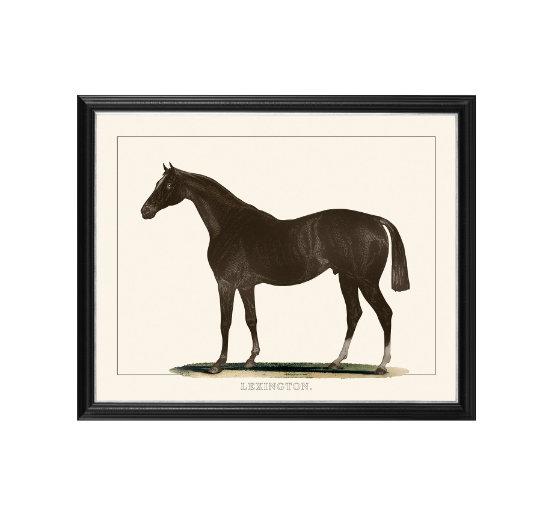 Listbild-horse 2