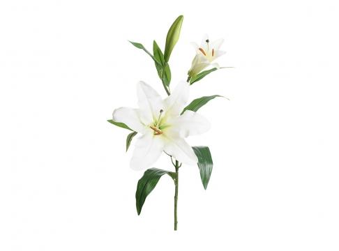 Lilja snittblomma vit 70cm 1