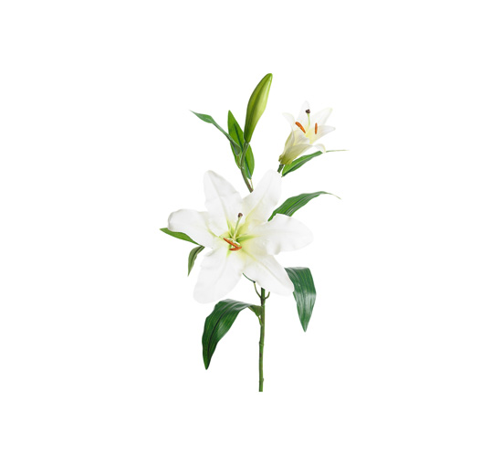 Listbild-lilja