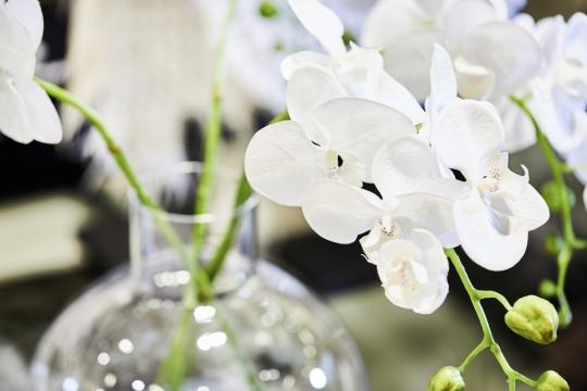Webbild orchide vit 105-3