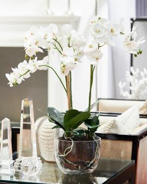Orkidé kruka 70cm 4