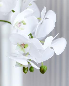 Orkidé kruka 70cm 1