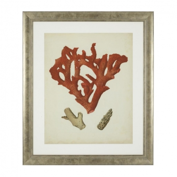 Tavlor Antique Red Corals set of 6 4