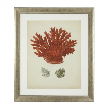 Tavlor Antique Red Corals set of 6 6
