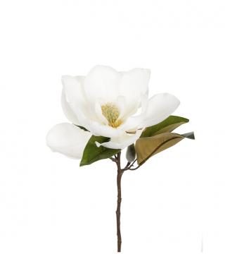 Magnolia snittblomma 50cm 1