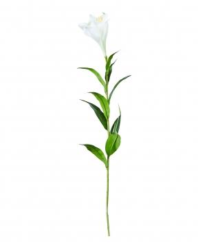 Lilja snittblomma vit 90cm 3