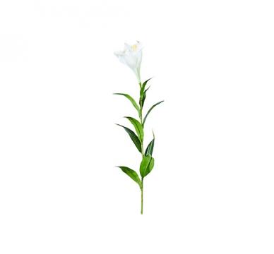 Lilja snittblomma vit 90cm 2