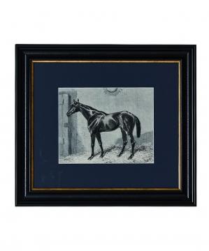 Abbie Häst tavla 35x40 1