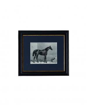 Carmel Häst tavla 35x40 1