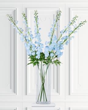 Delphinium snittblomma blå 130cm 5