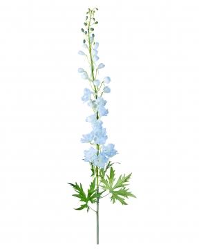 Delphinium snittblomma blå 130cm 3