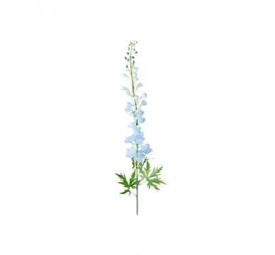 Delphinium snittblomma blå 130cm 4