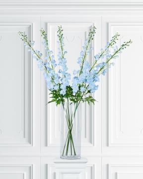 Delphinium snittblomma blå 130cm 1