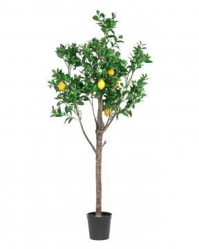 Citronträd 210cm 1
