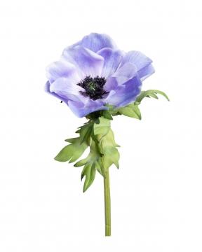 Anemon snittblomma lila 43cm 1
