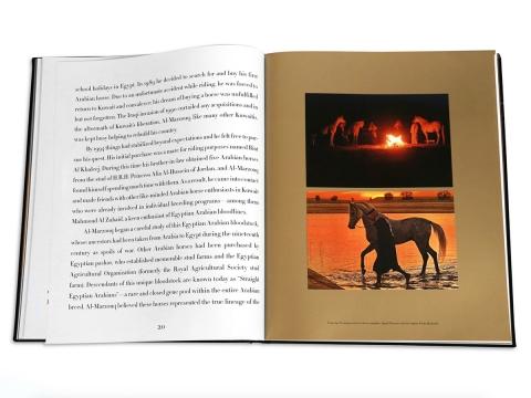Arabian Horses 3