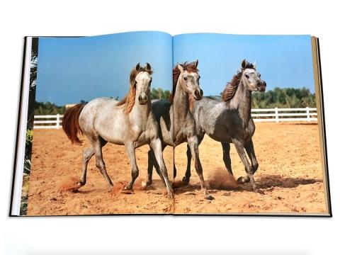 Arabian Horses 4