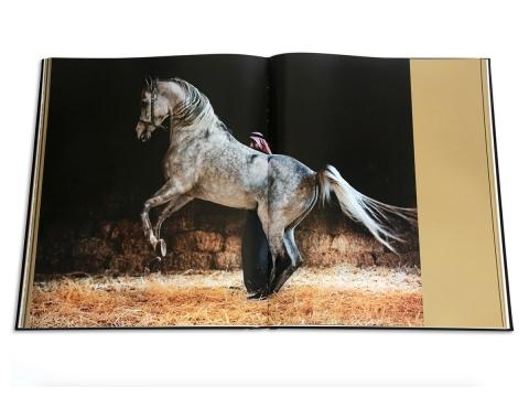 Arabian Horses 5