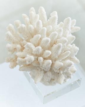Inès korall vit 2