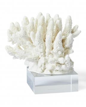 Inès korall vit 3