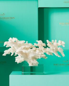 Adèle korall vit 4