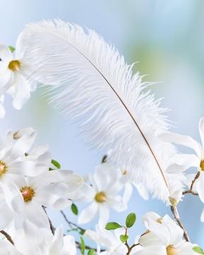 Tussilago strutsfjäder vit 1