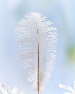 Tussilago strutsfjäder vit 2