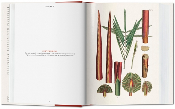 The book of palms 4