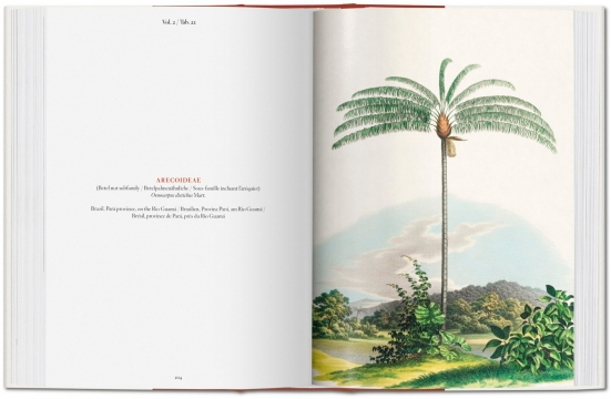 The book of palms 5