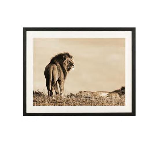 Tavla-lion-1