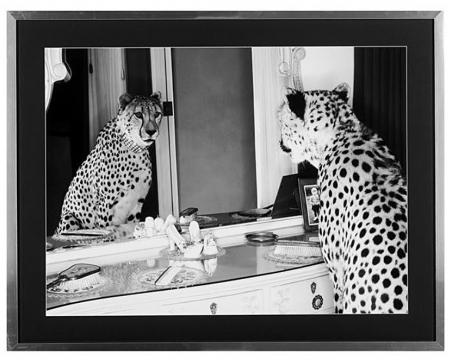 Cheetah looking in mirror 1