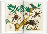 Cabinet-of-natural-curiosities-5