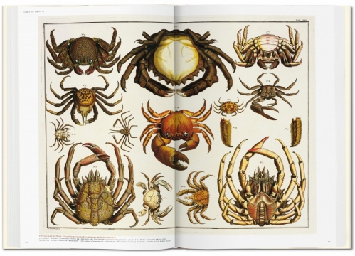 Cabinet of Natural Curiosities 6