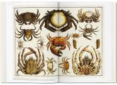 Cabinet-of-natural-curiosities-7