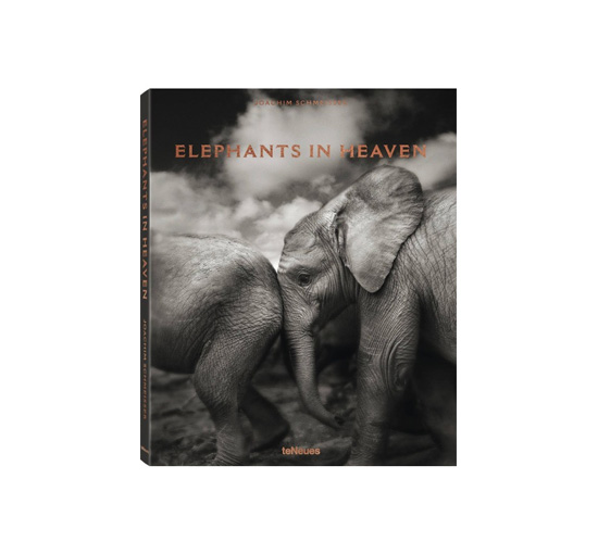 Elephants in heaven 1