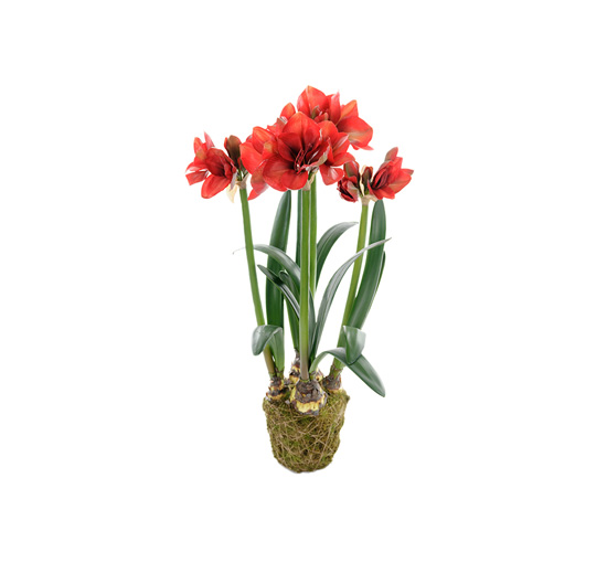 Amaryllis-red-100 1