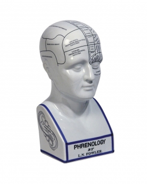Phrenology Head dekoration vit 3