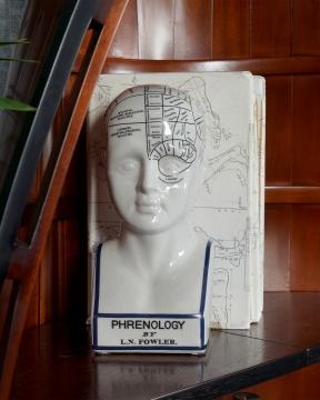 Phrenology Head dekoration vit 1